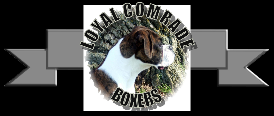 Loyal Comrade Boxers